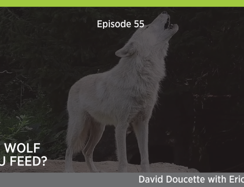 Episode 55: Which Wolf Do You Feed